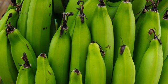green bananas flour