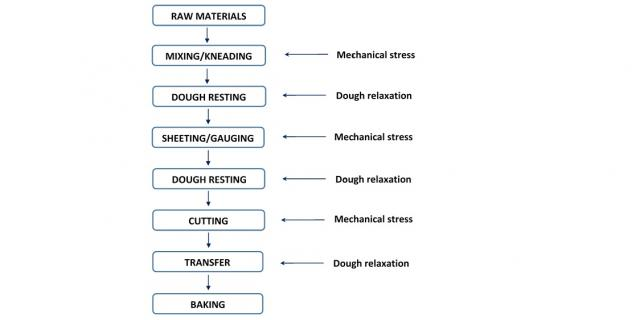 hard biscuit dough rheology