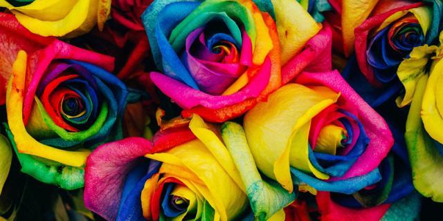 Roses GMO