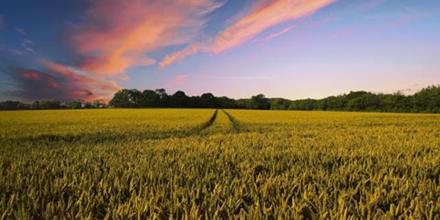 Farm Brothers productivelandand fertilesoil.