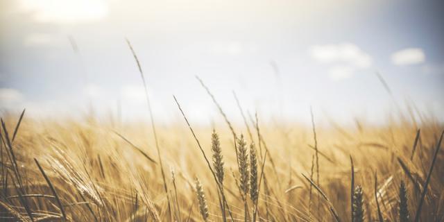 Herbicide-resistant weeds